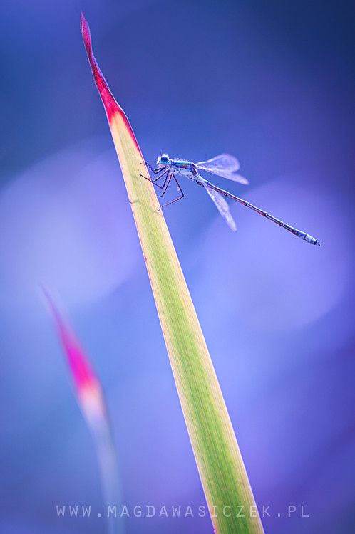 200 best images about Macro photography - Macro fotografie ...