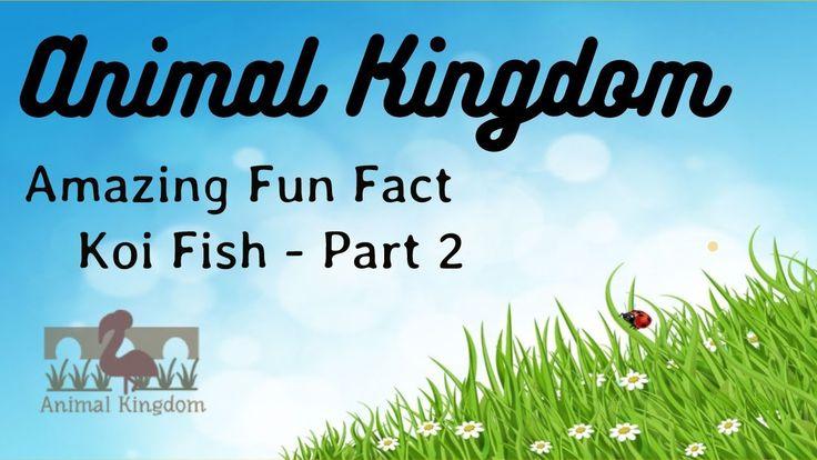 Animal Kingdom - Amazing Fun Fact about Koi Fish  – Part 2