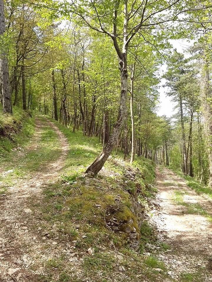 foto sentiero