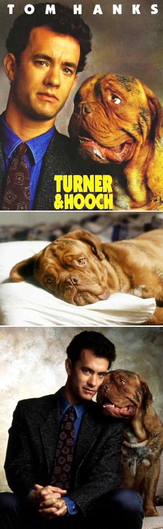 Most Famous Movie Animals HOOCH :D i love this movie :D and HOOCH dogue de bordeaux