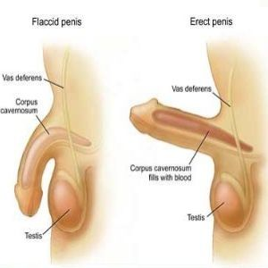 home remedies for penis erection jpg 1152x768
