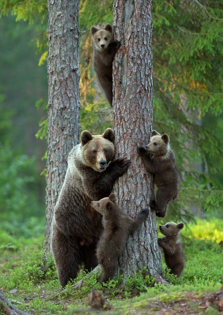 les 23 plus belles photos de famille du rgne animal
