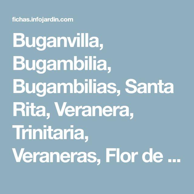 Buganvilla, Bugambilia, Bugambilias, Santa Rita, Veranera, Trinitaria, Veraneras, Flor de papel, Enredadera de papel, Buganvilia, Buganvil, Santarrita, Camelina - Bougainvillea spp.