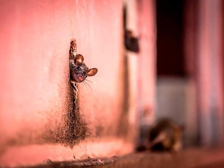National-Geographic-photos-of-the-day-2015-13