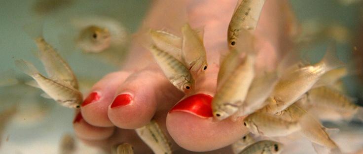 Fodbehandling med doktorfisk. http://www.odensethaimassage.dk/content/doktor-fisk