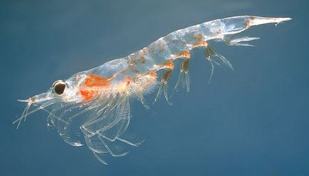 Nordic light order was a ‪‎Krill‬ oil contains vitamin E, vitamin A, vitamin D and canthaxanthin, which is — like astaxanthin — a potent anti-oxidant. http://www.northernlightproducts.no/ORDER