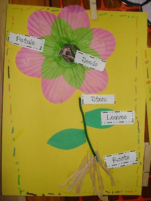 First Grade activity to go along with naming the various parts of the plant. This can be done as an assessment project after a unit or lesson on plant parts. 1-2.2 Illustrate the major structures of plants (including stems, roots, leaves, flowers, fruits, and seeds).