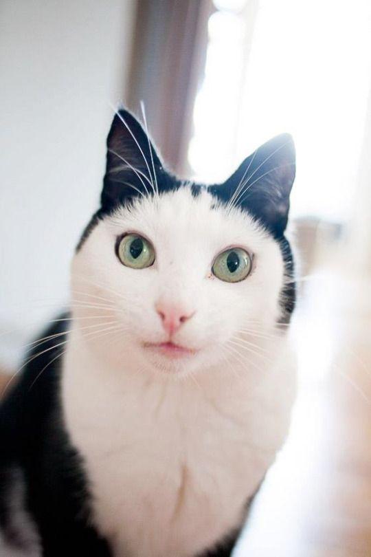 """""""La elegancia quiso cuerpo y vida, por eso se transformó en gato."""" - Guillermo de Aquitania"""