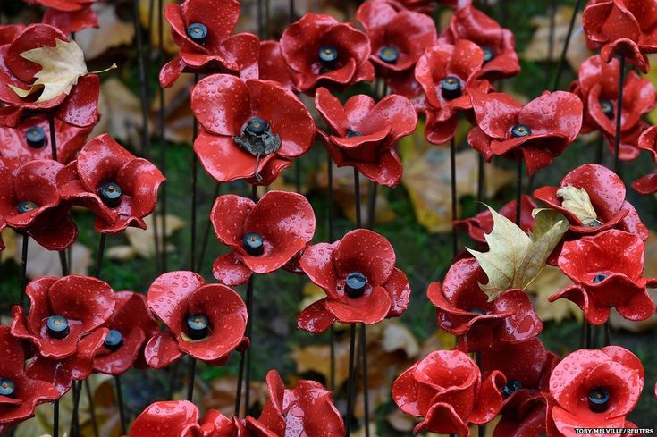 Fallen leaves are seen on ceramic poppies; Blood Swept Lands And Seas Of Red by ceramic artist Paul Cummins