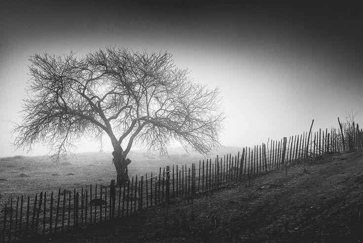 Beyond Silence by Serban Bogdan on Art Limited