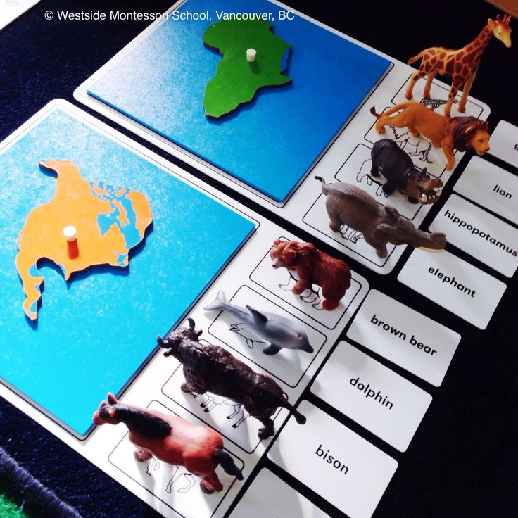 Animals of the continents work. This set is from Nienhuis Montessori and we are using here in conjunction with the Puzzle Map of the World. Love this Montessori Geography / Zoology activity!