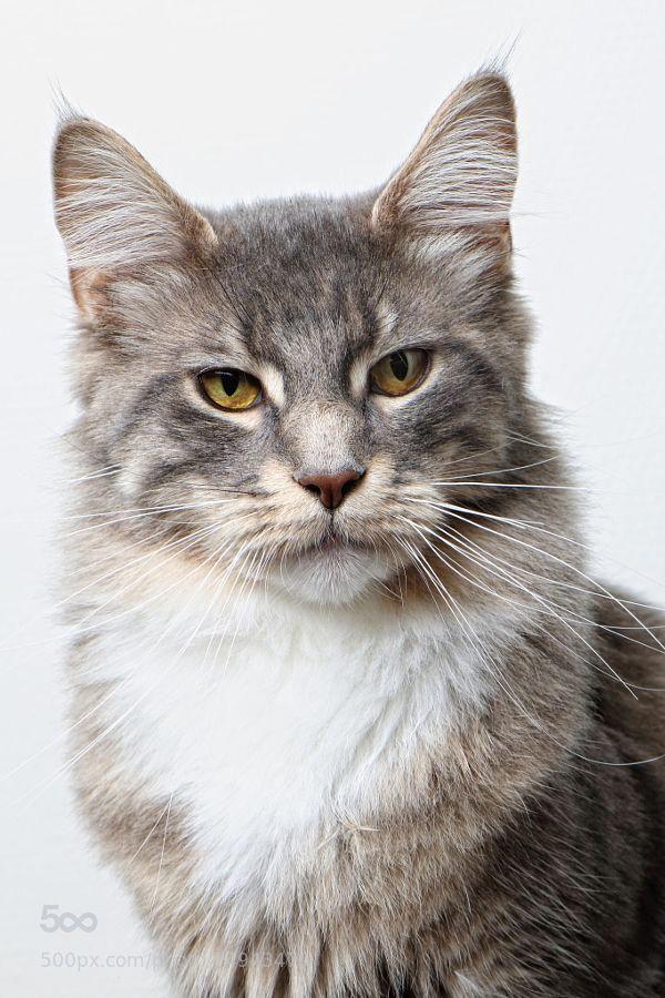 Catstagram Hashtag Instagram Posts Videos Stories On Picoji