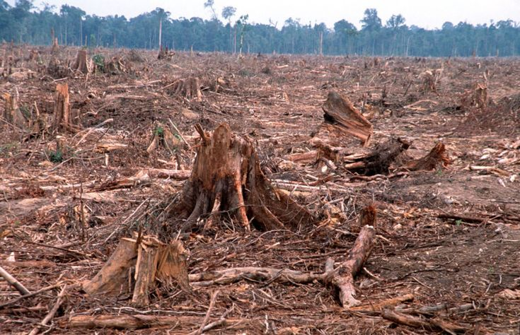 Deforestation, the permanent destruction of forests in order to make the land available for other uses, is considered to be a contributing factor to global climate change.