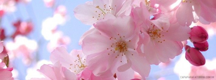 #Flor #natureza #flower