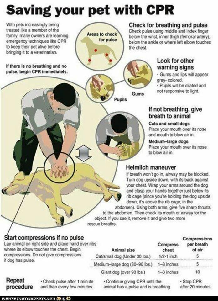 Unfortunately, I've done this once to my puppy. Even though she wasn't able to be saved, this is still so important to know.