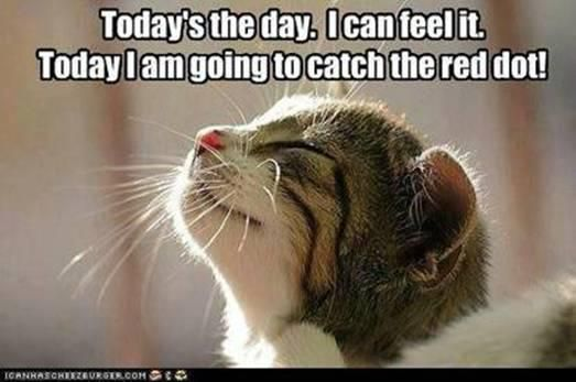 Today's the day!  @Nikki Weeks, I thought of your cats when I saw this!!: Cats, Face, Animals, Quotes, Funny, Red Dots, Smile, Kitty