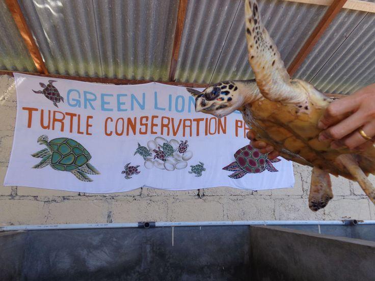 Schildpaddenproject @ Nusa Penida  - Vrijwilligerswerk Bali