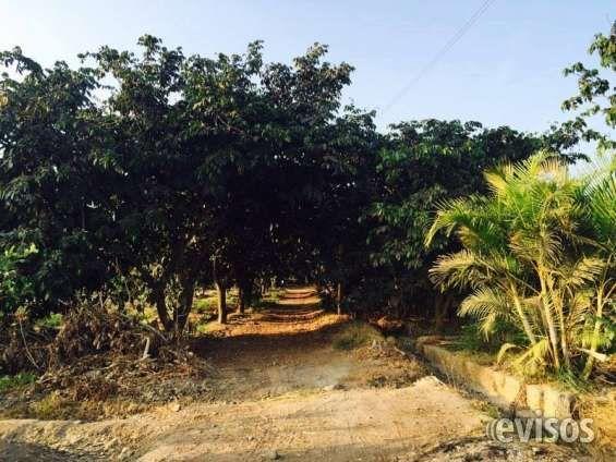 TERRENO DE 500 M2 EN HUARAL CON PLANTACIONES DE ARBOLES FRUTALES - Áreas desde: 500 m2 - Precio: AL CONTADO US $  .. http://huaral.evisos.com.pe/terreno-de-500-m2-en-huaral-con-plantaciones-de-arboles-frutales-id-615513