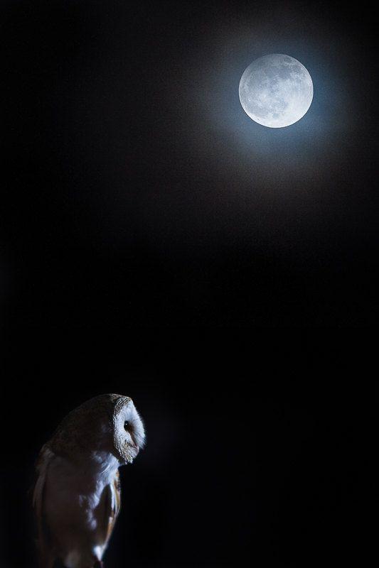 Luna de Duelo, Luna del Castor, Luna de la Lechuza                                                                                                                                                                                 Más