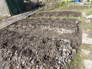 Eten uit eigen tuin: paden afgraven en om bedden te verhogen. Deze voor aardappels, beter waterafvoer, minder rotte piepers.