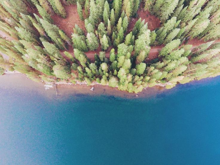 sea ocean blue water nature coast trees plant nature forest aerial view