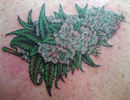 Blue berry, Marijuana plants and Weed pics on Pinterest