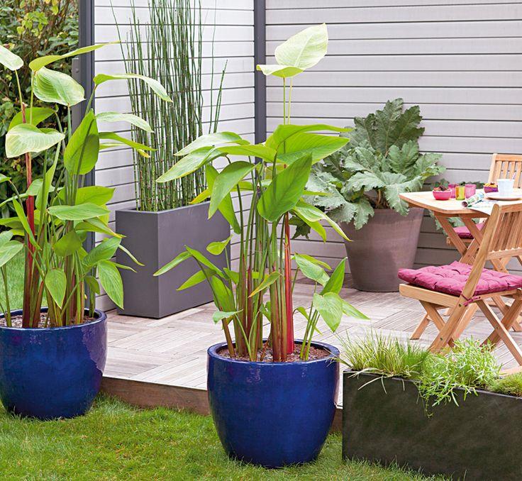 Thalia, une belle plante aquatique!