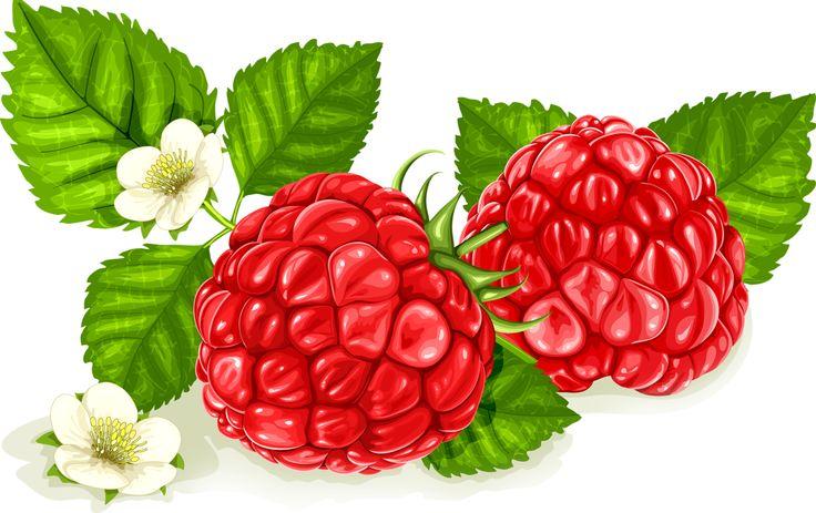 ягода малина картинка цветная