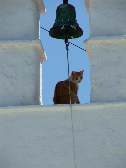 Bella the cat in Greece