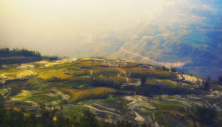 Golden Rice Terrace by Tam Doan on 500px