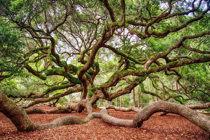 Angel Oak by Christopher L.Nelson on 500px