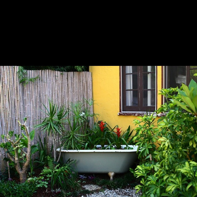Salvaged Claw Foot Tub. Fish And Plants Now Soak In This Vintage Bathtub,