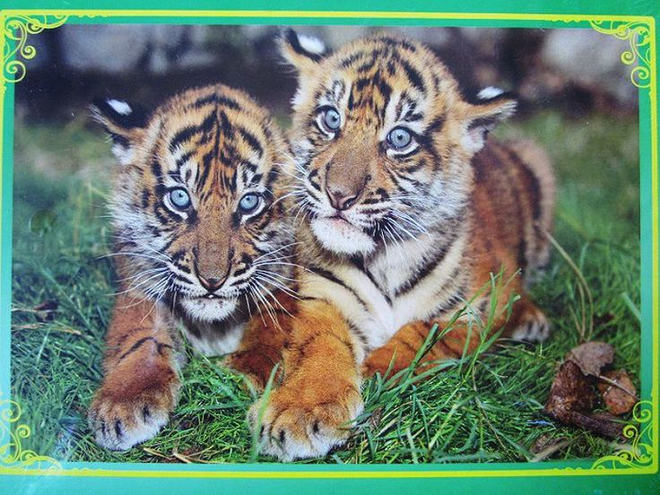 300 pieces Paper Puzzle Animal Little Tiger Puzzles 300 pieces Creative birthday gift toy free puzzles online