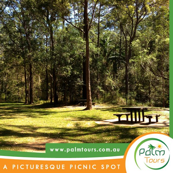 Pack Picnic Fall Day Trip Hinterland Tours You definitely desire to pack a picnic lunch for your day trip here,
