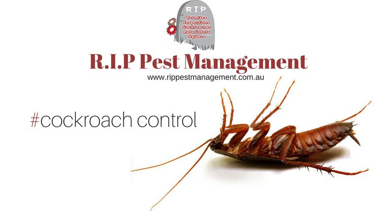 Cockroaches are not only undesirable pests but a threat to human health by consuming our food and contaminating the indoor environment.