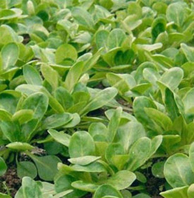 Kuzu Gevreğiyle Yapılmış Lezzetli Bir Yemek Malzemeler: 4 yumurta, 500 gr genç dönemde toplanmış bitki, 2 adet patates, 1 adet soğan, 2 diş sarımsak, 1 çorba kaşığı ay çiçek yağı, tuz, kırmızıbiber.   Yazının Devamı: Kuzu Gevreğiyle Yapılmış Lezzetli Bir Yemek | Bitkiblog.com Follow us: @BİTKİ BLOG on Twitter | Bitkiblog on Facebook