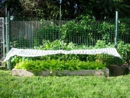Grow lettuce all summer long diy shade covering for - How to store lettuce from garden ...