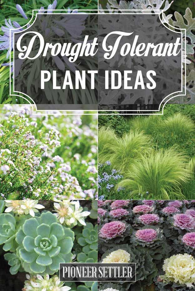 20 drought tolerant plants for your low maintenance garden for Low maintenance drought tolerant plants