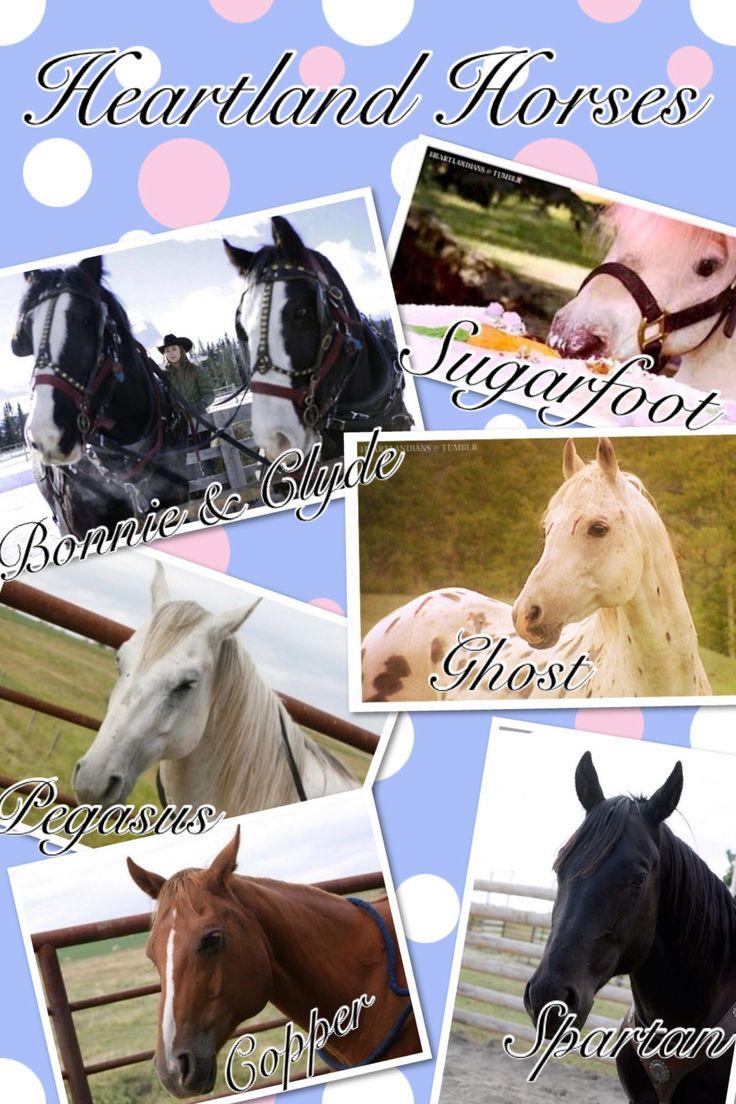 Heartland horses(where's Harley?)