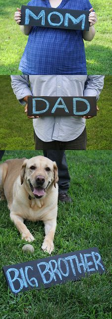 Aww <3 I would so do this! Pregnancy announcementPhotos Ideas, Adorable Photos, Maternity Photos, Announcements Baby Ideas, Maternity Pictures Dogs, Big Brothers, Big Sisters, Maternity Shoots, Best Ideas Pregnancy Photos