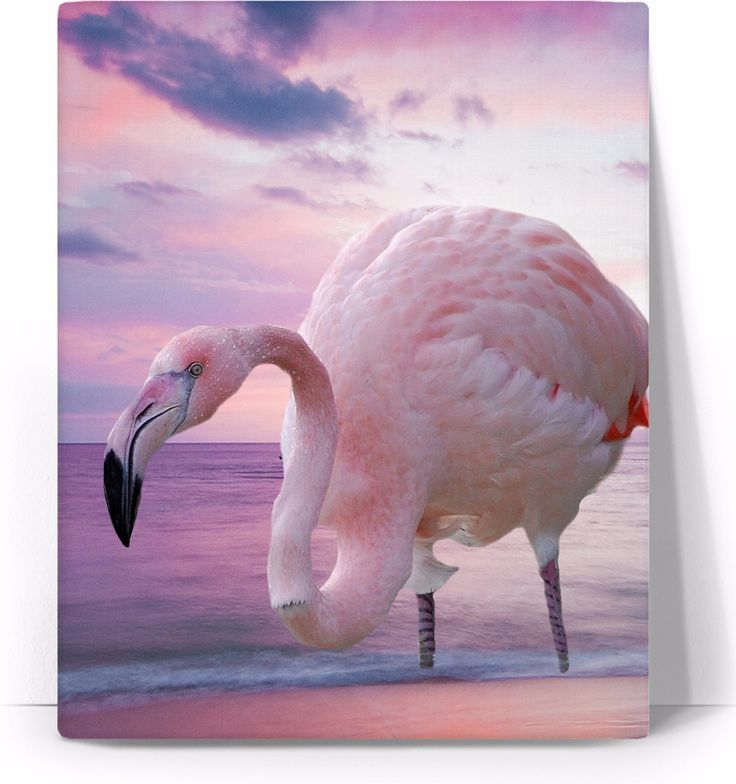 Check out my new product https://www.rageon.com/products/flamingo-and-pink-sky-art-canvas-print?aff=BWeX on RageOn!