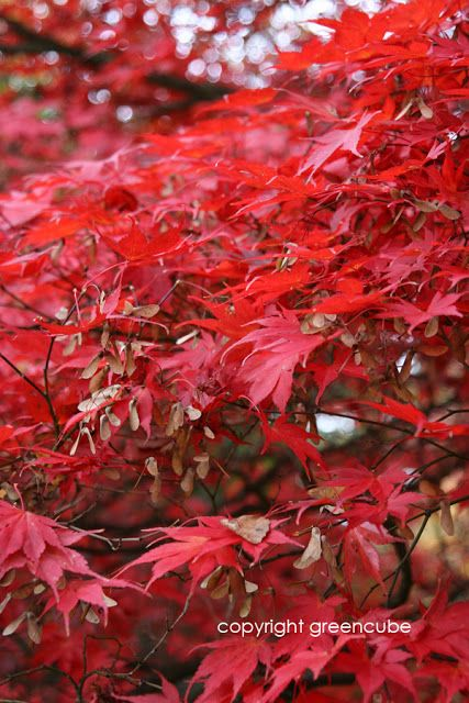 photography by greencube garden and landscape design, UK: Autumn Colour at Sheffield Park