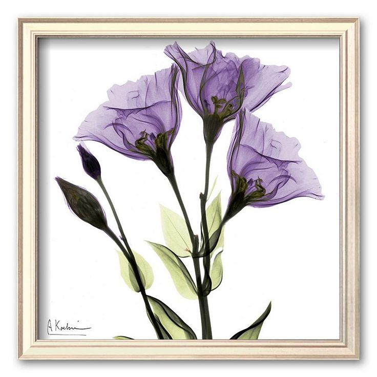 Art.com Gentian in Purple Framed Art Print by Albert Koetsier, Multicolor