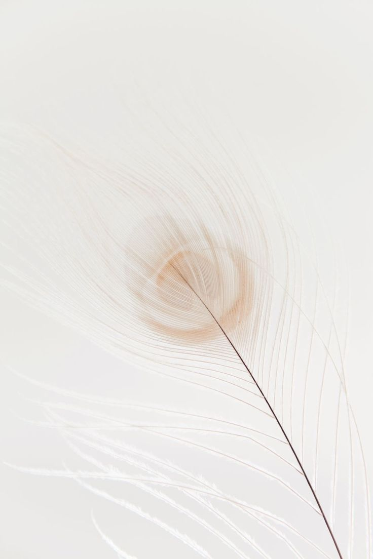 Colour Color White Feather In 2019 Wallpaper White