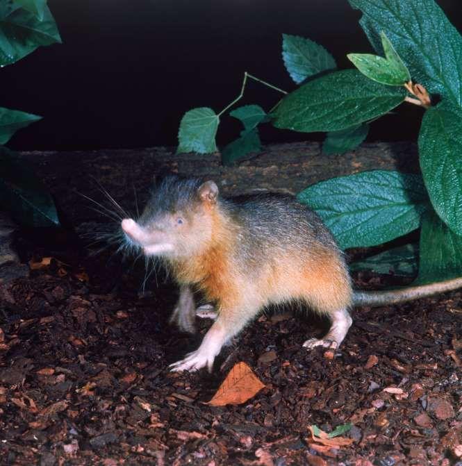 71 best az bİlİnen hayvanlar images on pinterest rare