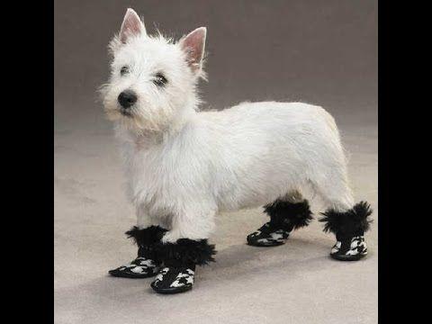 (70) como hacer zapatos para perros paso a paso - YouTube