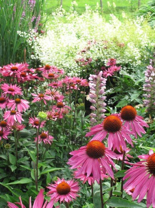 91 best Border garden full Sun images on Pinterest Decks