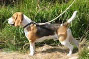 Southlake Dog Care --> http://www.southlakedogcare.com/