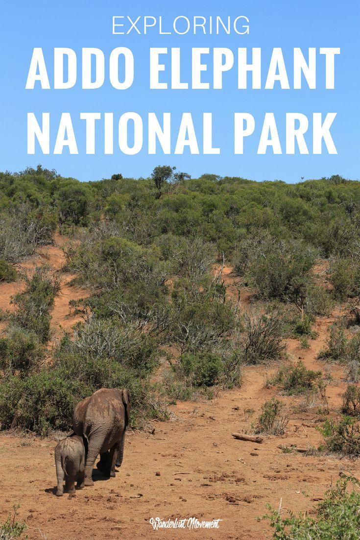 Exploring Addo Elephant National Park with Nelson Mandela Bay Tourism | Wanderlust Movement