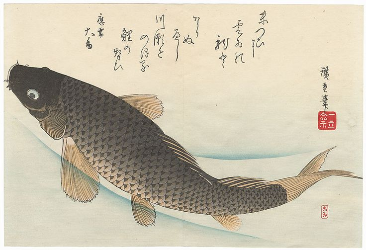 """Carp"" by Hiroshige (1797 - 1858); Japanese woodblock print...............ukiyoe japan decoration antique fineart home decor collectible japanese woodblock print handmade home art beautiful decorative etching illustration traditional woodcut koi fish tattoo"
